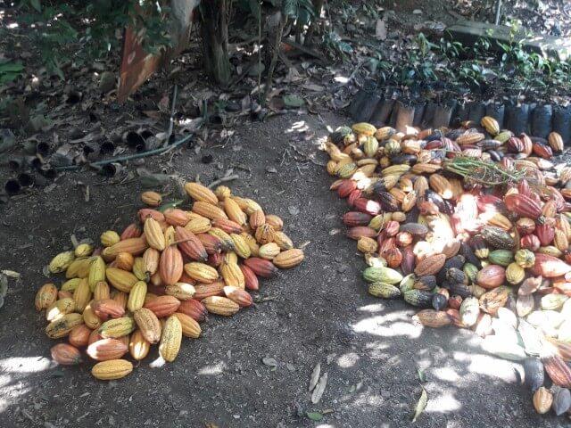 Kakao-Selektion